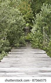 pier leading ashore through some hedges