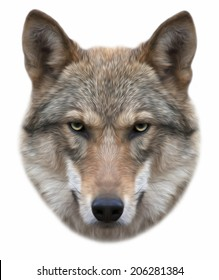 Piercing look of a severe wolf, isolated on white background. European wolf, beautiful animal and dangerous beast. Amazing portrait in oil painting style, great for user pic, icon, label or tattoo.