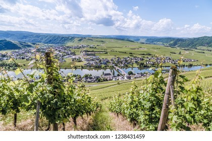 Piesport on the Moselle Rhineland-Palatinate Germany.