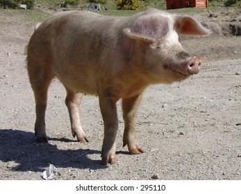 Pig (2004)
