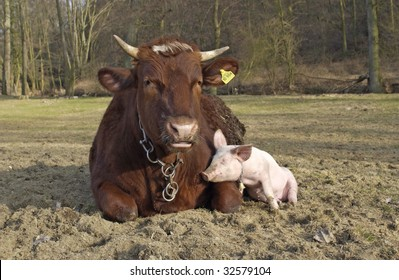 pig babe with his friend