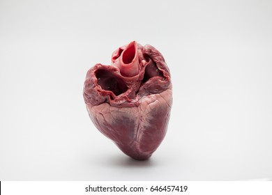 Pig hearts.,raw pig heart close-up isolated on white background.