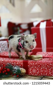 Pig new year, a symbol of 2019
