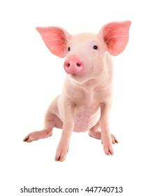 Schweinefleisch auf weißem Hintergrund. Eine Reihe von Fotos Schweine in verschiedenen Posen.