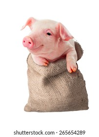 Pig in the rag bag. Isolated. Sale, delivery, transportation of animals