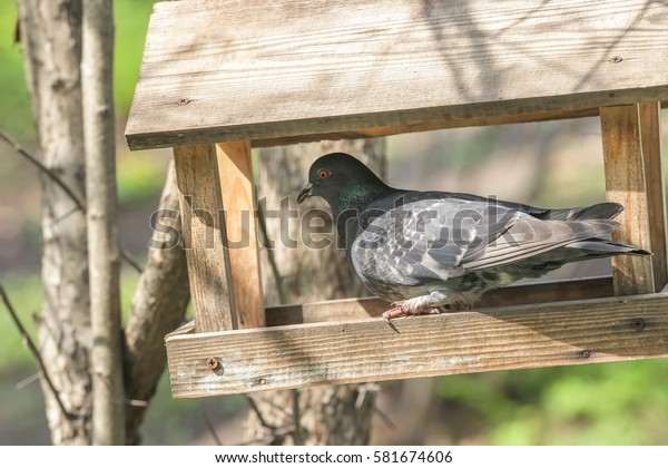 Pigeon Dove Wooden Bird Feeder On Stock Photo Edit Now 581674606