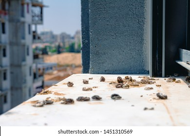 Pigeon droppings on the windowsill. A building under construction in the background. Side view.