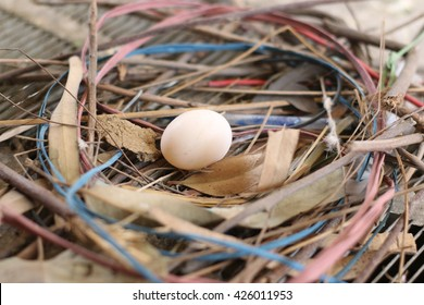 Pigeon egg in its nest.