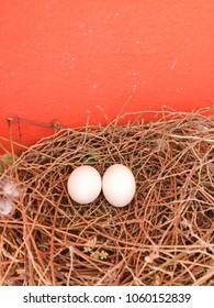pigeon eggs in birdnest with orange wall