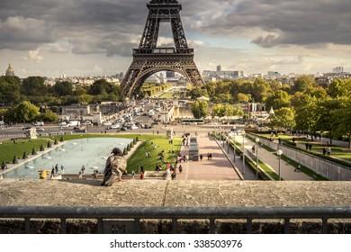 Pigeon and Eifel Tower