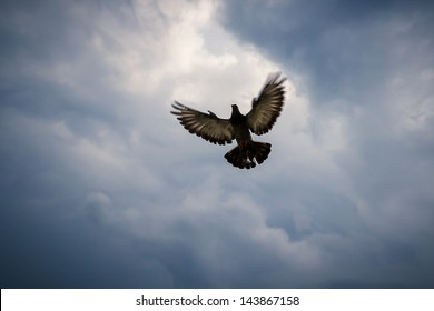 Pigeon fly on dark cloud