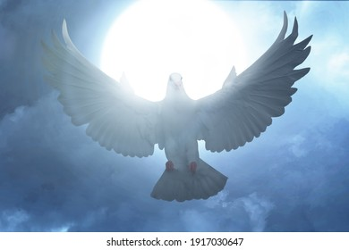 Pigeon flying with the night scene background