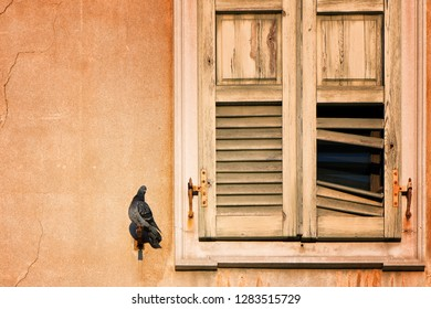 Pigeon having a sun bath while perked to the side of a crumbling window