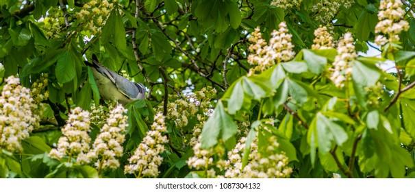 Pigeon hiding in tree