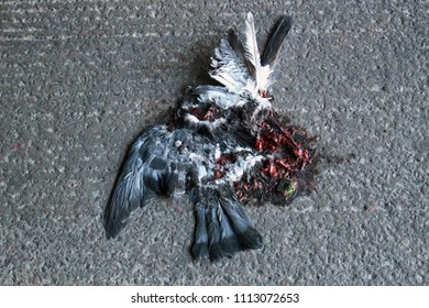 A pigeon hit by a car, became a gruesome flat mass of guts,blood and feathers.