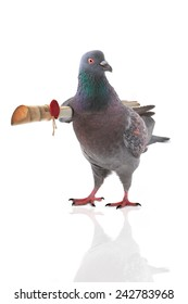 pigeon with the letter under a wing