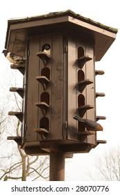 Pigeon loft with three various pigeons