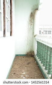 pigeon nest with eggs and pigeon feces on the terrace floor of house / pigeon feces is unhealthiness problem in the city