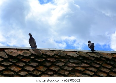 Pigeon on the roof in the centre of the town