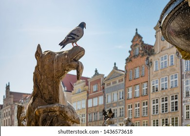 Pigeon on a top of an ancient sculpture, Neptune fountain in Gdansk (Danzig) Poland. Detail.