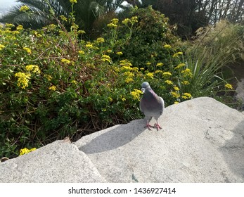 Pigeon in the park, Santiago City