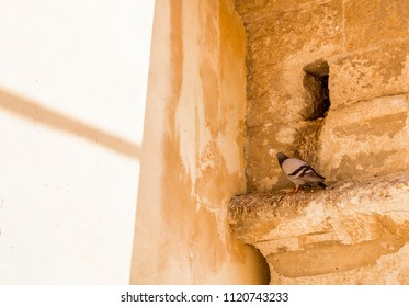 A Pigeon perched on a wall outside it's nest.