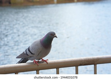 a pigeon sits on the railing
