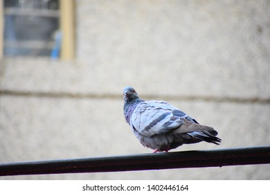 pigeon sitting on a cable - 9