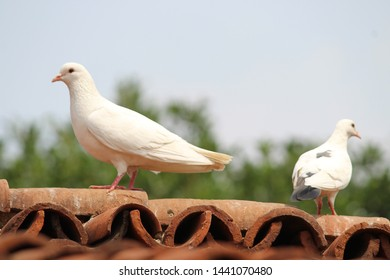 pigeon sitting on the rooftop