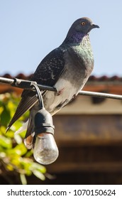 Pigeon sitting on wire with nearby lightbulb.
