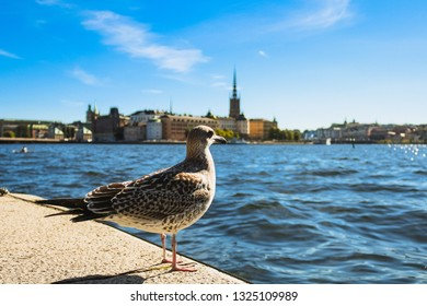 Pigeon at waterfront at Stockholm Stadshus / town hall with view of Stockholm skyline on Gamla Stan during blue summer day (Stockholm, Sweden, Europe)