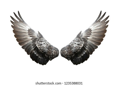Pigeon wings isolated on white background