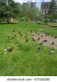 Pigeons among green grass on playground, residential buildings behind
