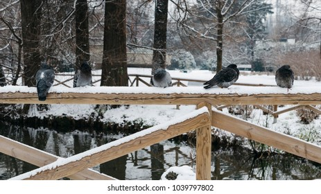 Pigeons and doves sitting on the railing of a bridge on a winter day.