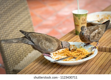 Pigeons eating dinner rests from restaurant table
