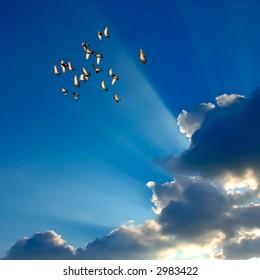 pigeons flight