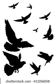 Pigeons fly. A flock of flying. Silhouette on a white background.