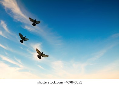 Pigeons flying in the blue sky