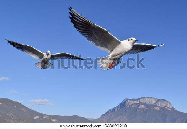 Pigeons flying in the blue sky.