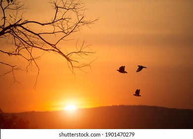 Pigeons are flying over the mountains and beautiful sunset. Landscape silhouettes and birds on the orange sky in the evening. In the concept of animal homecoming.