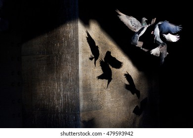 Pigeons flying through sun rays creating abstract shadows