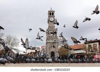 Pigeons in front of the clock tower - Hamamonu district, Ankara - Turkey