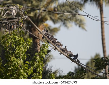 Pigeons hanging out on a wire in Phoenix, Arizona