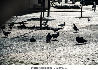 Pigeons having lunch