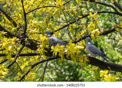 Pigeons at the Malbork castle grounds located near the town of Malbork, Poland.