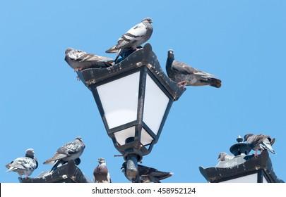 Pigeons mess on streetlight against blue sky