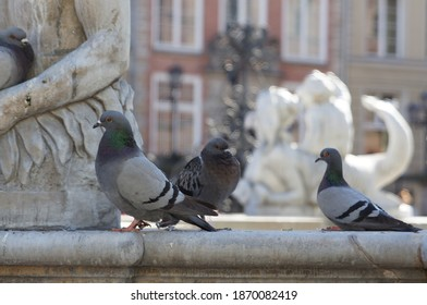 Pigeons at the Neptune Fountain in Gdansk