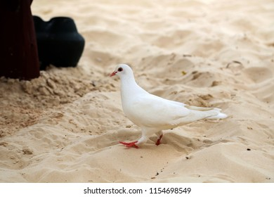 Pigeons on the beach
