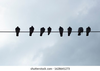 Pigeons on electrical wires. Filmed in the opposite light. Silhouette. Cloudy sky in the background.