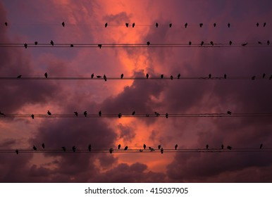 Pigeons on the electrical wires isolated on fantastic sky cloud background
